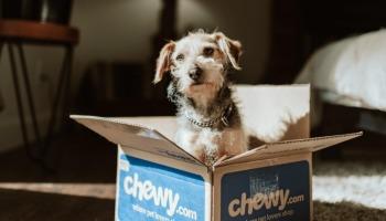 25 melhores raças de cachorro para apartamento 🐾