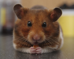 12 animais de estimação exóticos e pequenos para ter em casa
