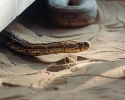 Os 26 animais mais perigosos do mundo: quais são e por quê?