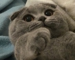 As 18 raças de gatos mais lindas e fofas do mundo que você precisa conhecer!