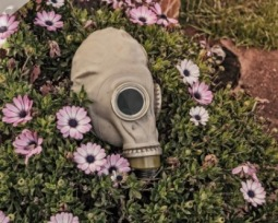 Descubra as coisas mais perigosas que vivem no seu quintal