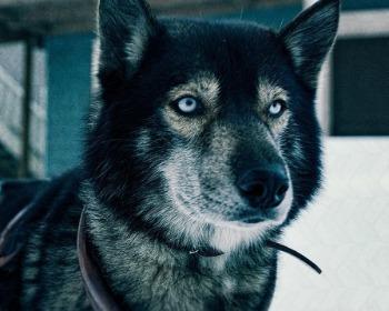 16 filmes de cachorro que vão conquistar você