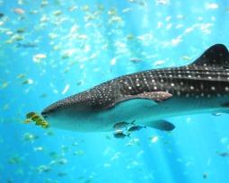 Os 10 maiores e mais impressionantes animais marinhos do mundo!