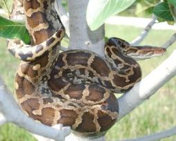 As 9 maiores cobras do mundo (que conhecemos)