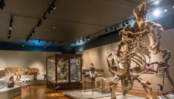 12 museus em São Paulo que você precisa conhecer