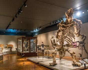 12 museus em São Paulo que todo estudante precisa conhecer