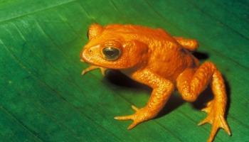 Os mais incríveis animais extintos recentemente