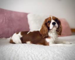 As 16 raças de cachorro pequeno mais populares e fofas 🐶